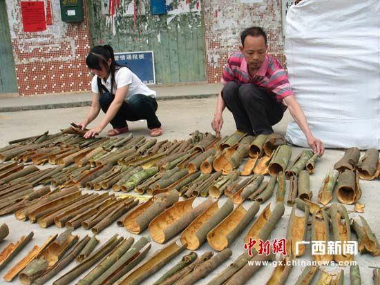 国际玉桂市场回暖 容县玉桂出口贸易额预计超2亿元