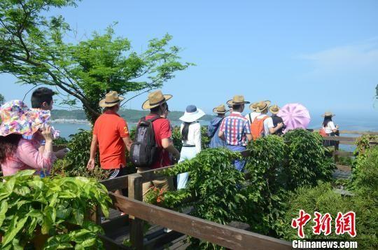 海外华文媒体团在涠洲岛鳄鱼山景区参观。 翟李强 摄