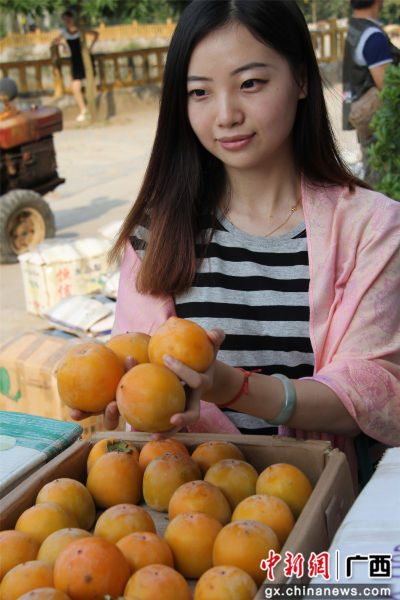 游客拿着牛心柿。