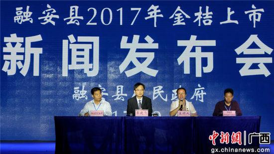 融安县2017年金桔上市新闻发布会现场。谭凯兴 摄