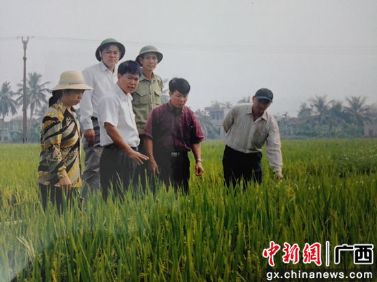 中国农业专家吕荣华(前排右三)在越南指导农民种植水稻。