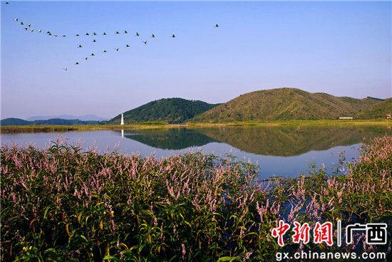 山环水抱的西津国家湿地公园。