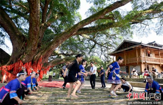 5月19日,人们在三江侗族自治县良口乡产口景区古榕树下欢跳竹竿舞。龚普康 摄