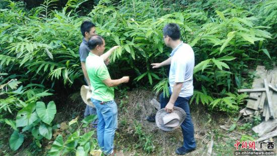 专业教师调研并推广中草药砂仁种植技术。朱名明 摄