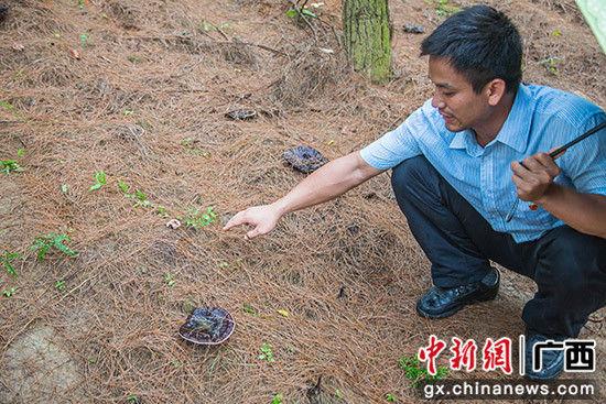 图为负责人介绍灵芝生长情况。