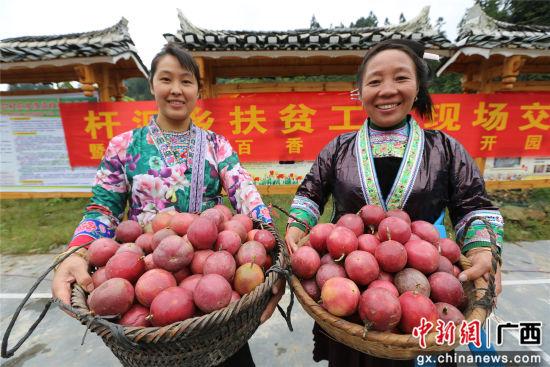 村民展示采摘的百香果。石峰 摄