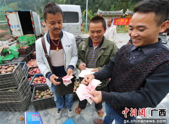 百香果收购点,村民正在数钱。石峰 摄