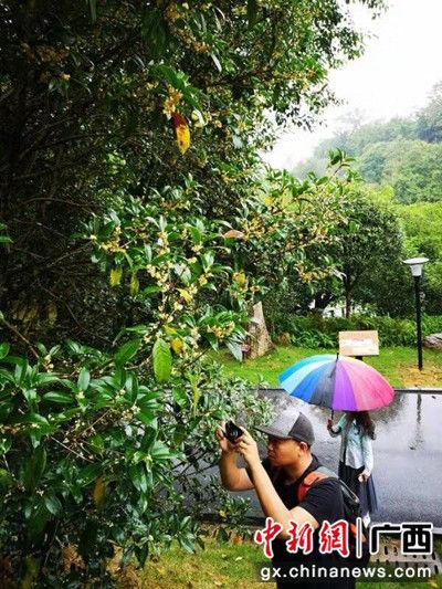 青秀山风景区供图