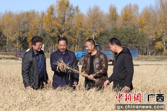 中国农技推广协会会长陈生斗等专家现场观看富硒水稻。