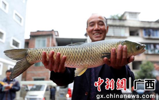一名村干部展示获赠的河边鱼。覃庆和 摄
