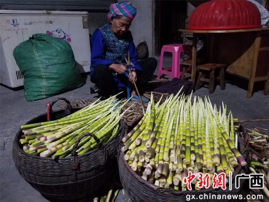 一名妇女在整理重阳笋。石峰 摄