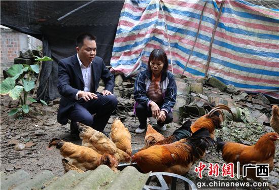 邮储银行隆安县支行发放扶贫小额信贷支持贫困户养殖