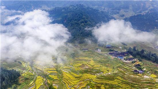 《云雾下的梯田》-杨立生-13807729983-拍摄于2018.1067日-杆洞乡-DJI_0766