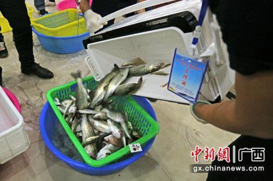 图为参赛者的渔获。张竞文 摄