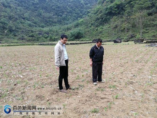 仲夏的小暑,广西田阳县五村镇大言村山里头和右江河谷的天气一般火