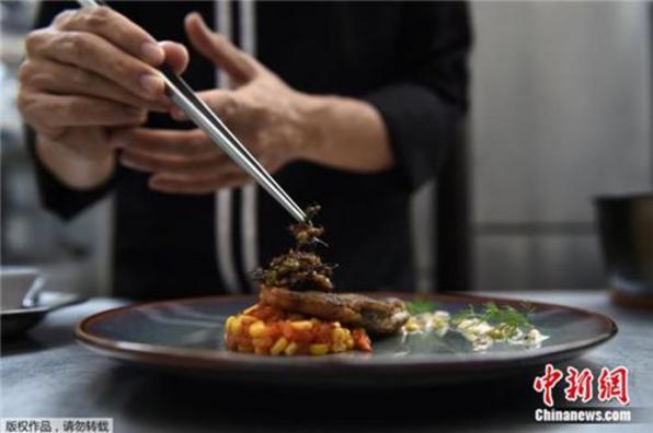 舌尖上的另类美食:泰国高档餐厅以各类昆虫入馔