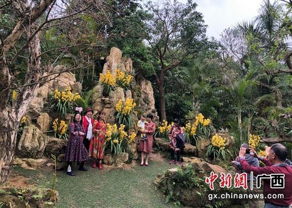 """广西南宁青秀山春季兰花展""""兰花大咖""""云集"""
