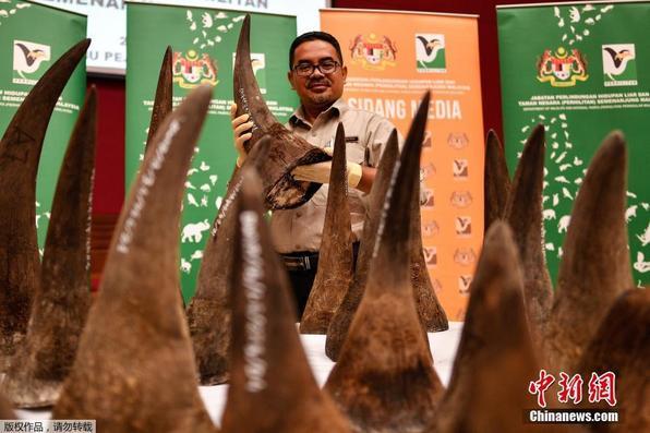 马来西亚缴获50支犀牛角 价值1200万美元为历年之最