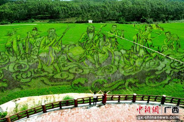 稻花香里说丰年 开户送体验金宾阳古辣将办稻田艺术文化节