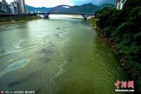 广西桂江现大片油污 市民带孩子江中游泳