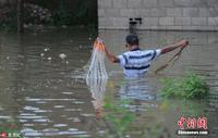 南宁持续降雨 市民在被淹绿地拉网捕鱼