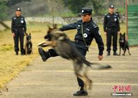 南宁铁警警犬繁育训练基地举行开放日活动