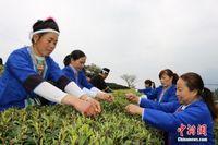 """广西三江赛采茶 妇女比拼""""指尖上的舞蹈"""""""