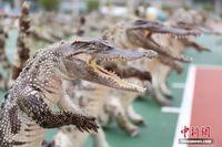 广西防城港边防查获537件鳄鱼制品