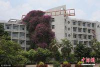 """广西大学现巨型""""鲜花瀑布"""" 24年长30米高"""