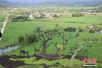 广西田间种出3D彩色水稻画 带动农民增收
