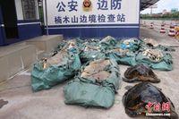 广西边防官兵查获涉嫌非法运输玳瑁标本及11袋鲨鱼皮