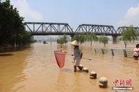 广西柳州现超警戒水位洪水 民众水中取乐