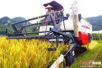 广西早稻成熟 全国各地收割机蜂拥而至