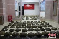 广西边防查获162只国家二级保护动物东方鲎