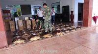 广西查获38只玳瑁 被人用开水烫死