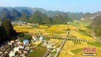 航拍开户送体验金柳州万亩稻田披金美如画