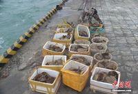 广西查获276只国家二级保护动物东方鲎