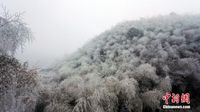 """气温骤降 广西高寒山区草木""""白头"""""""