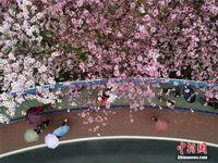 广西柳州烟雨朦胧 民众冒雨赏花