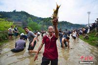 广西龙胜瑶族欢庆花炮节 民众徒手抓鱼
