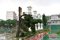 广西柳州遭遇狂风袭击 现场一片狼藉