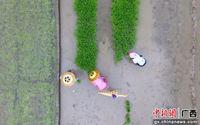 立夏将至广西三江农事忙