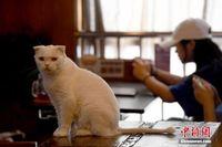 """""""宠物猫""""主题饮品店亮相开户送体验金南宁"""