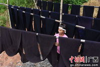 广西三江侗乡酷暑染布忙