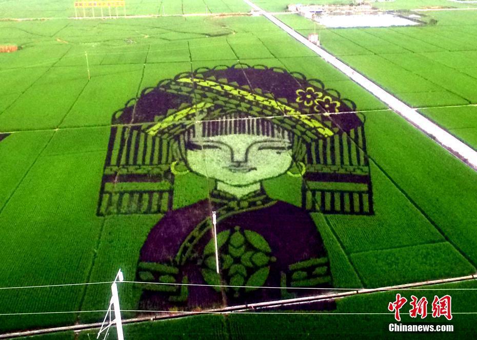 开户送体验金高铁沿线现大型稻田艺术景观带