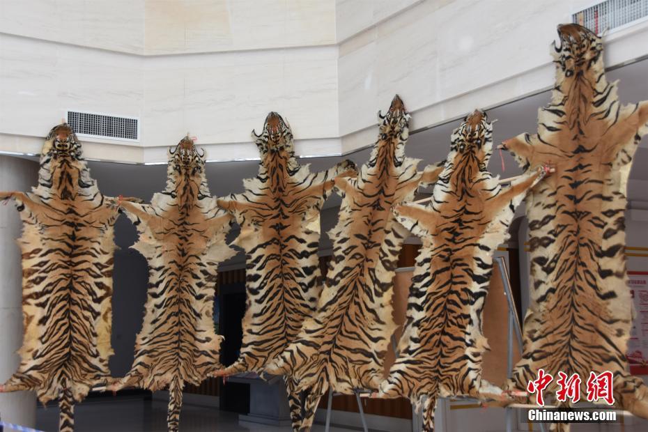 广西缴获大量野生动物制品 涉案价值近三千万元