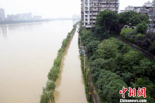 图为柳江河水已漫过柳州市区滨江西路延长线路段.